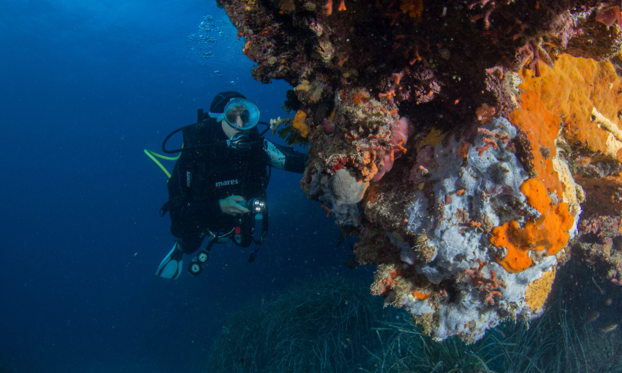 Bosa Diving